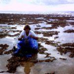 inspiration Polynésie Claire-Marie Fournier platier atoll manihi