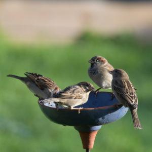 Abreuvoir mangeoire pour oiseaux du jardin Noron